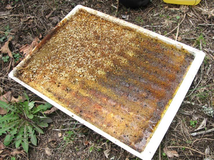 Screen Bottom Layens Beehive Free Plans