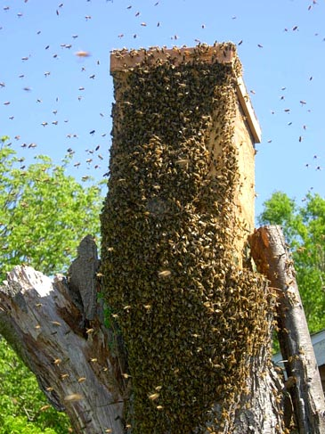 Swarm Traps And Bait Hives Natural Beekeeping